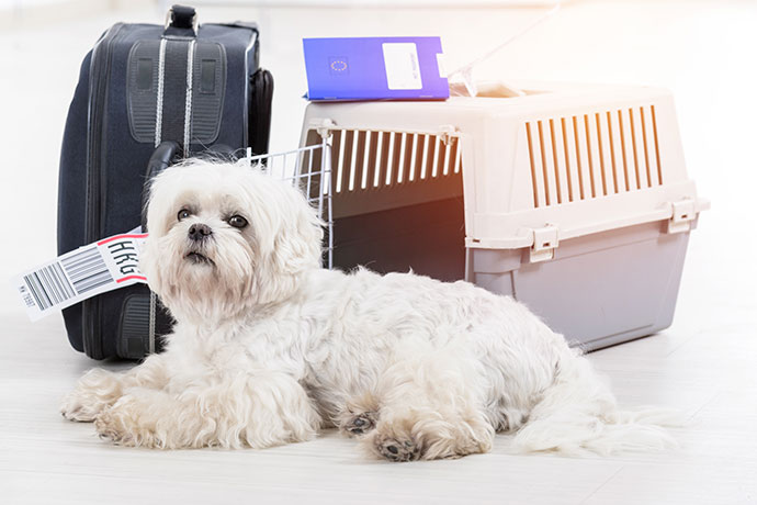 How to bring a pet to China using pet relocation services